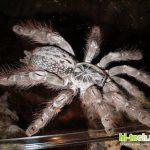 Яд тарантула спасет детей с эпилепсией